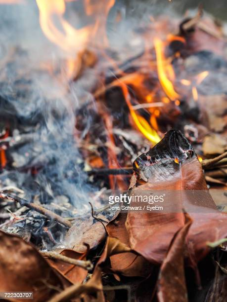Close-Up Of Burning Fallen Dry Leaves Heap