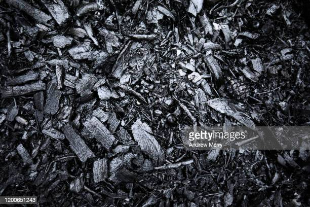 closeup of burnt black forest floor after bush fire, australia - burning stock pictures, royalty-free photos & images