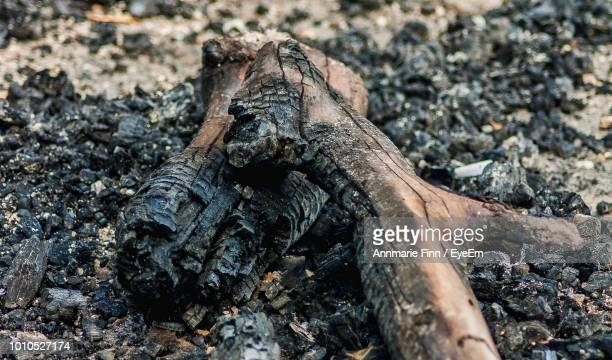 Close-Up Of Burnt Firewood