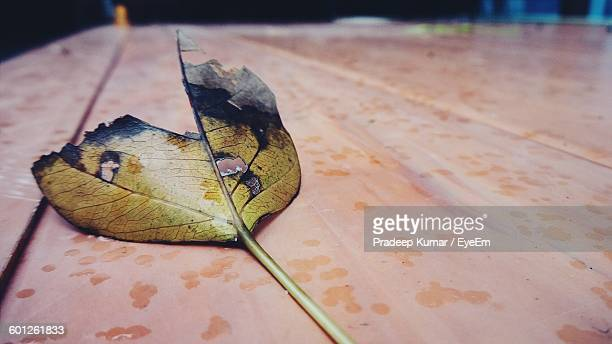 Close-Up Of Burnt Leaf On Table