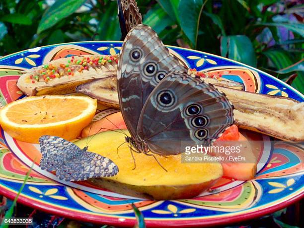 Close-Up Of Butterflies On Mango Slice In Plate