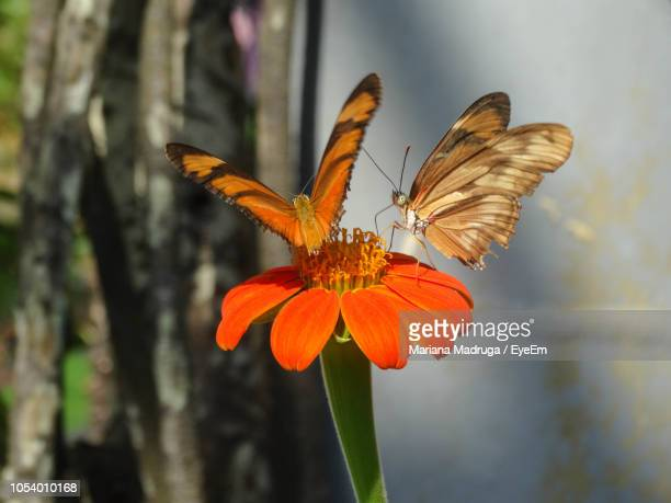 Close-Up Of Butterflies On Orange Flowers Blooming Outdoors