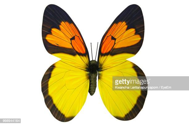 Close-Up Of Butterfly Against White Background