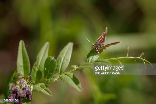 Close-up of butterfly and ant on flowering plant