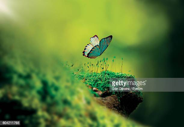 Close-Up Of Butterfly Flying Over Moss Growing On Tree Trunk