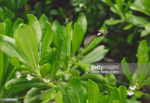 close-up of butterfly flying over plant - bortes foto e immagini stock