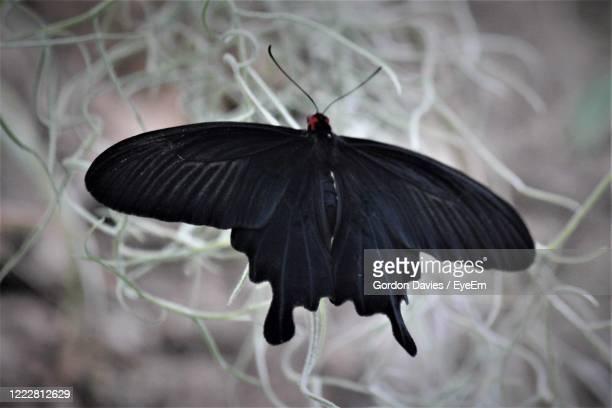 close-up of butterfly flying - stockton on tees stock pictures, royalty-free photos & images