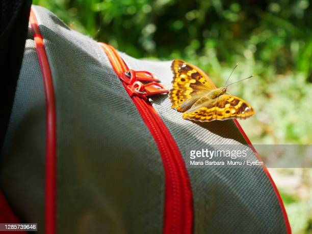 close-up of butterfly on a bag - treviso italy stock pictures, royalty-free photos & images