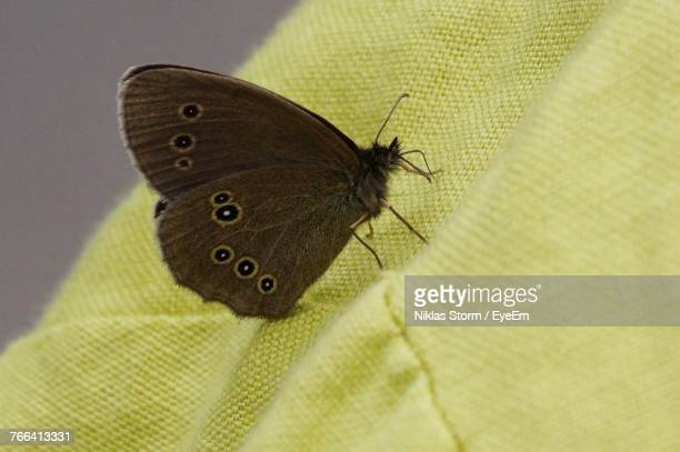 Close-Up Of Butterfly On Fabric