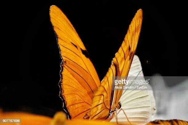 Close-Up Of Butterfly On Flower At Night