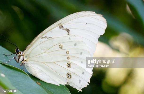 close-up of butterfly on flower - oranjestad stockfoto's en -beelden
