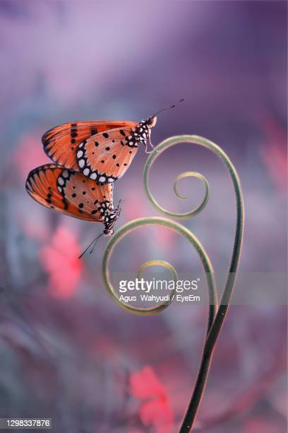 close-up of butterfly on flower - central kalimantan stock pictures, royalty-free photos & images