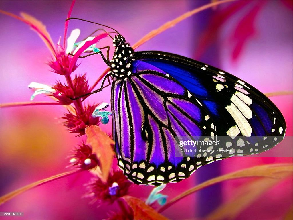 Close-Up Of Butterfly On Flower : Foto stock
