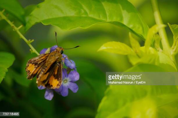 close-up of butterfly on flower - muhamad nasrun stock pictures, royalty-free photos & images