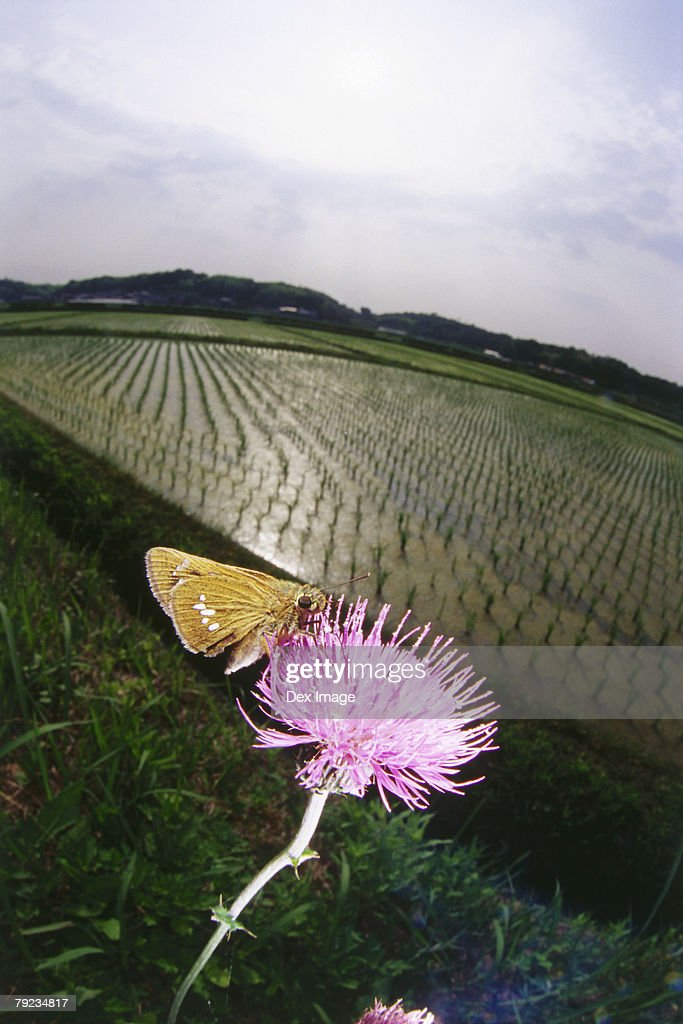 Close-up of Butterfly on flower : Stock Photo