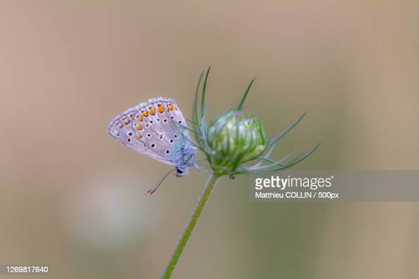 close-up of butterfly on flower, saint-girons, france - アリエージュ ストックフォトと画像