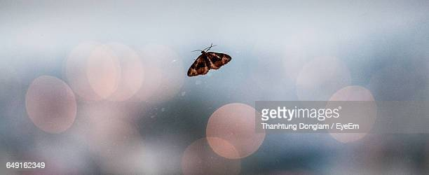Close-Up Of Butterfly On Glass Window