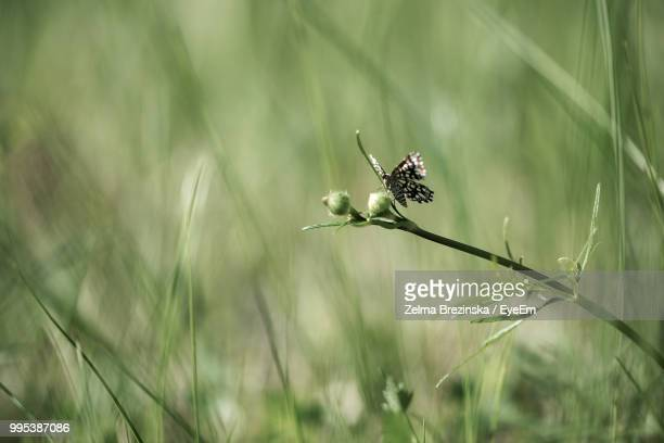 close-up of butterfly on grass - brezinska stock pictures, royalty-free photos & images
