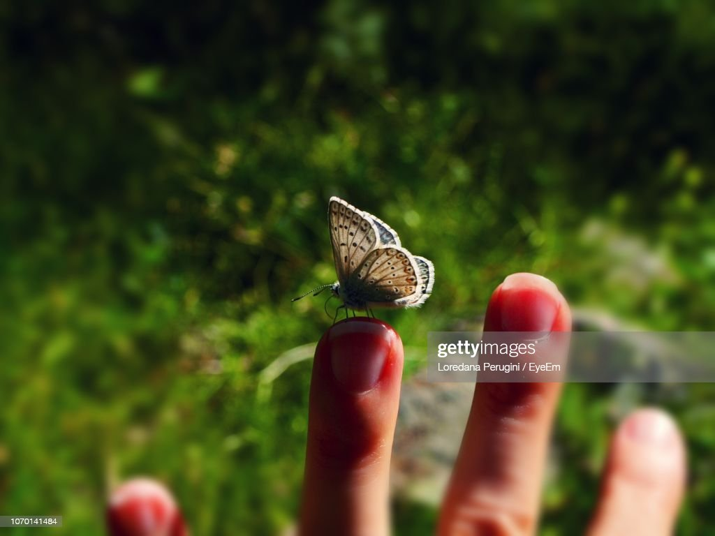 Close-Up Of Butterfly On Hand : Foto stock