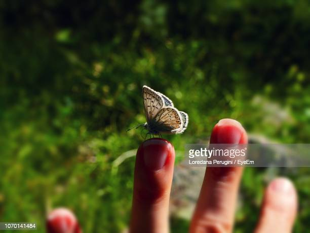close-up of butterfly on hand - loredana perugini fotografías e imágenes de stock