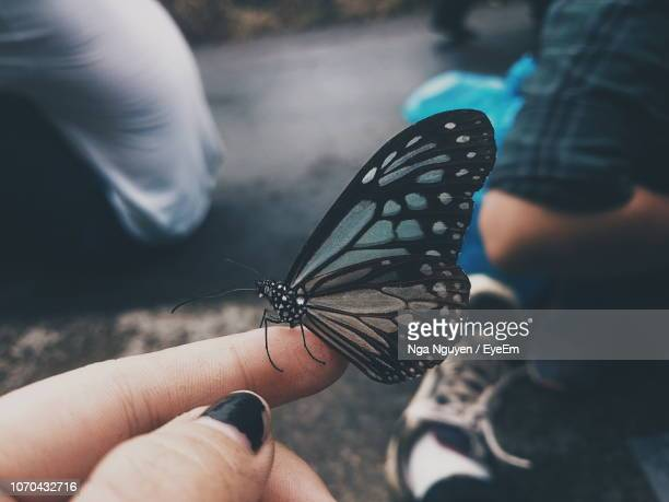 close-up of butterfly on hand - nga nguyen stock pictures, royalty-free photos & images
