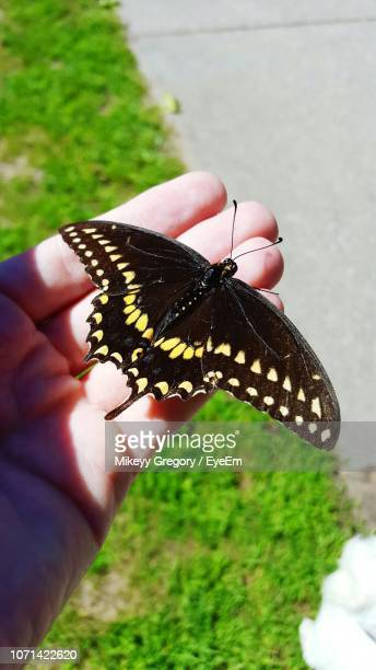 close-up of butterfly on hand - ポートヒューロン ストックフォトと画像