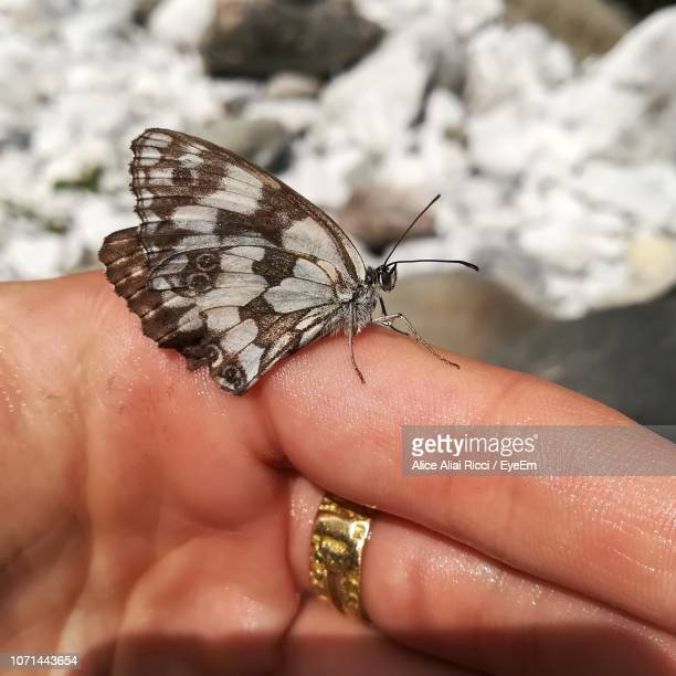 close-up of butterfly on hand - aliai foto e immagini stock