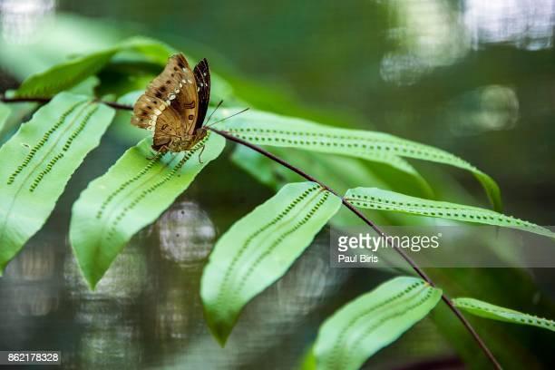 Close-Up Of Butterfly On Leaf, Malaysia, Kuala Lumpur