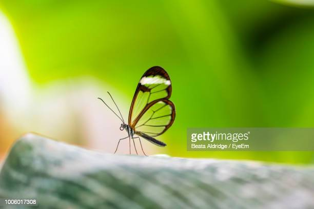 close-up of butterfly on leaf - animal limb stock photos and pictures