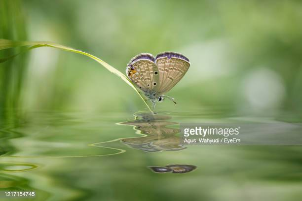 close-up of butterfly on leaf - central kalimantan stock pictures, royalty-free photos & images