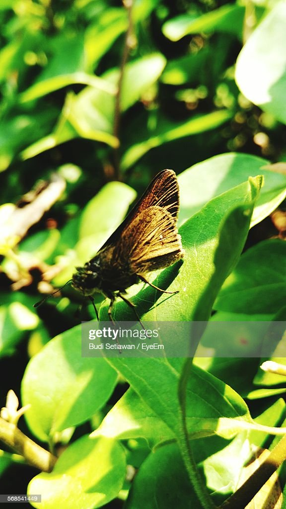Close-Up Of Butterfly On Leaf : Stock Photo