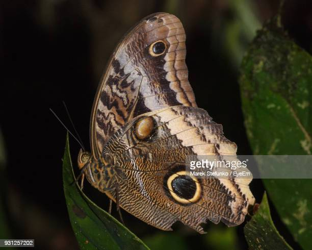 close-up of butterfly on leaf - marek stefunko stock photos and pictures