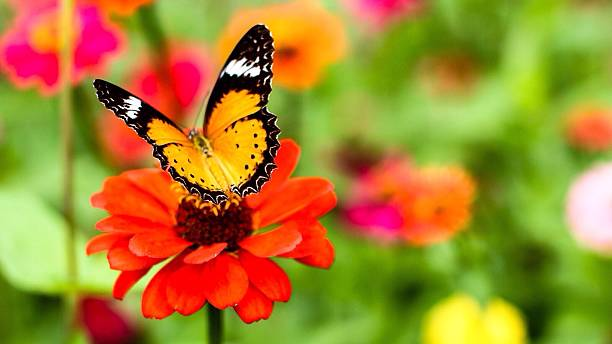Close-Up Of Butterfly On Orange Flower Wall Art
