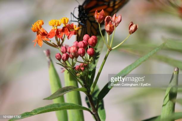 close-up of butterfly on plant - steven cottingham stock-fotos und bilder