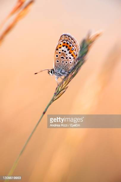 close-up of butterfly on plant - andrea rizzi foto e immagini stock