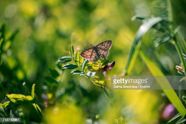 close-up of butterfly on plant - brezinska stock pictures, royalty-free photos & images