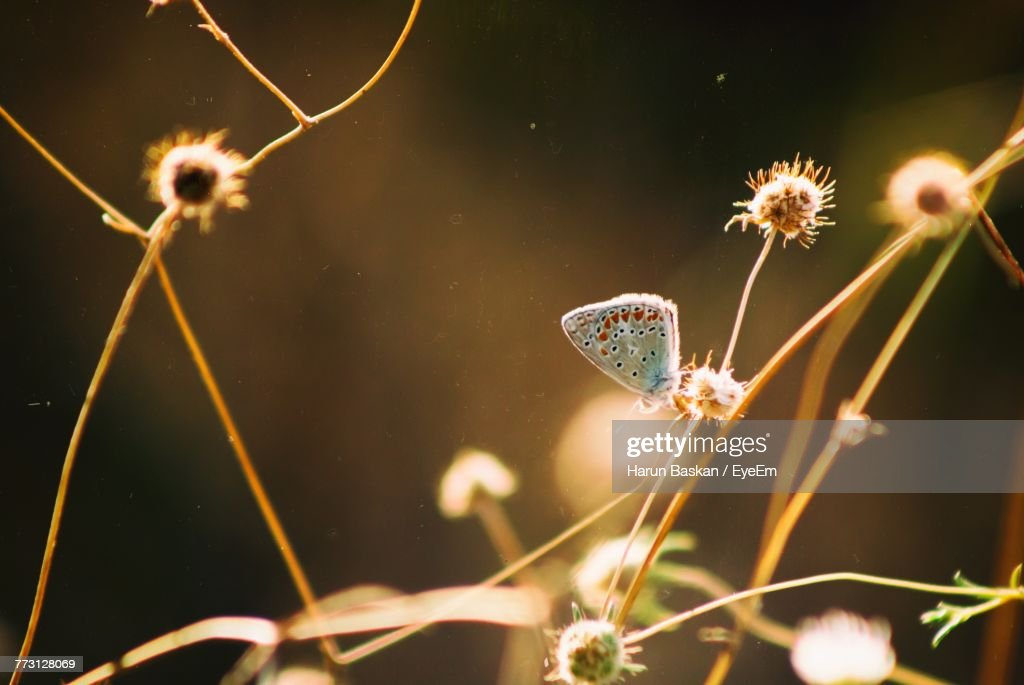 Close-Up Of Butterfly On Plant : Stock Photo