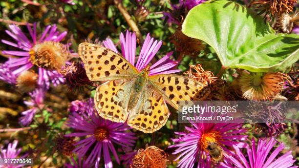 close-up of butterfly on purple flowers - elena knouzi stock pictures, royalty-free photos & images
