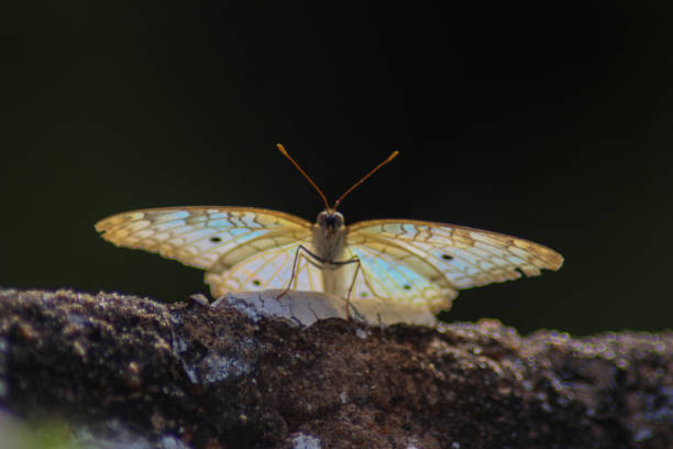 Close-Up Of Butterfly On Rock