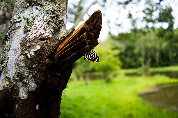 Close-Up Of Butterfly On Tree At Field
