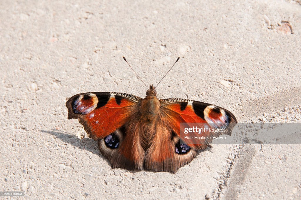 Close-Up Of Butterfly On Wall : Stock Photo