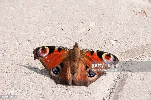 close-up of butterfly on wall - piotr hnatiuk photos et images de collection