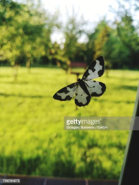 Close-Up Of Butterfly On Window