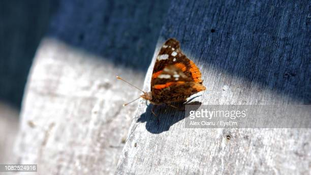 close-up of butterfly on wood - alex olariu stock photos and pictures