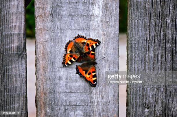 close-up of butterfly on wood - nikitina stock pictures, royalty-free photos & images