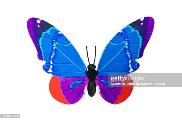 469 Blue Butterfly White Background Photos And Premium High Res Pictures Getty Images