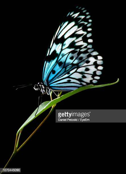close-up of butterfly perching on black background - farfalle colorate foto e immagini stock