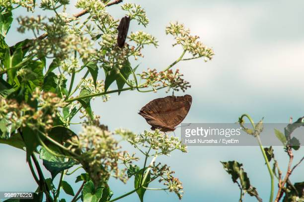 Close-Up Of Butterfly Perching On Flowers