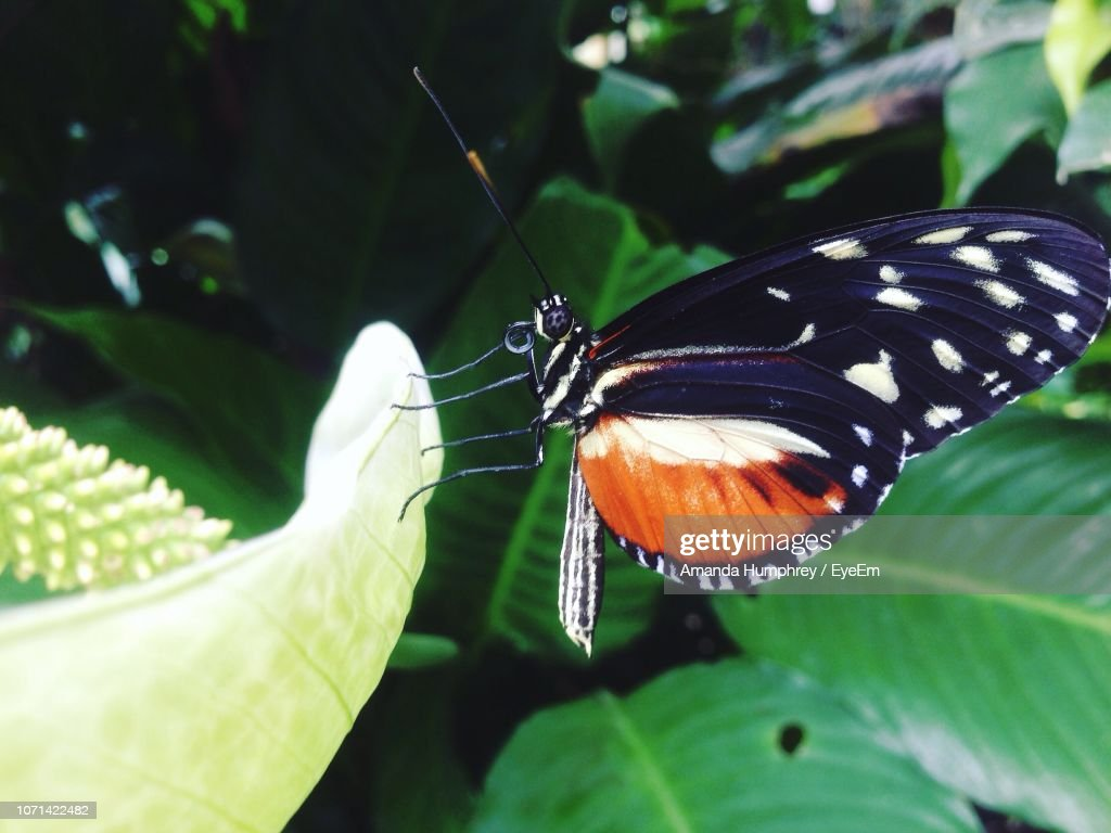 Close-Up Of Butterfly Perching On Leaf : Stock Photo