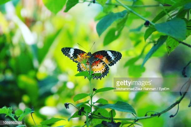 close-up of butterfly perching on plant - ziaur rahman stock pictures, royalty-free photos & images
